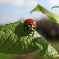 Tons for amazing ladybug facts in this interesting article full of the best facts.