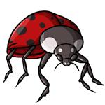 Ladybug Clip Art 10