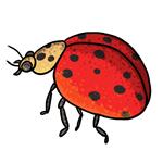 Ladybug Clip Art 15
