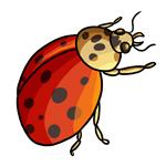 Ladybug Clip Art 16