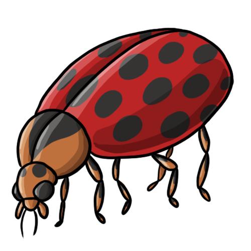 FREE Ladybug Clip Art 19