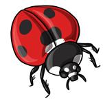 Ladybug Clip Art 6