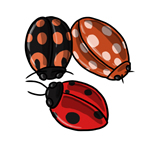 Ladybug Clip Art 7