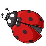Ladybug Clip Art 9